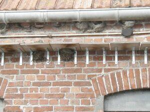 Nest huiszwaluw